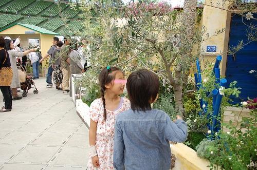 rosa en jardin 2