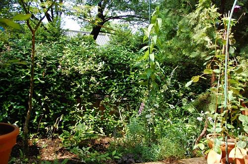 jardin de azamann 5