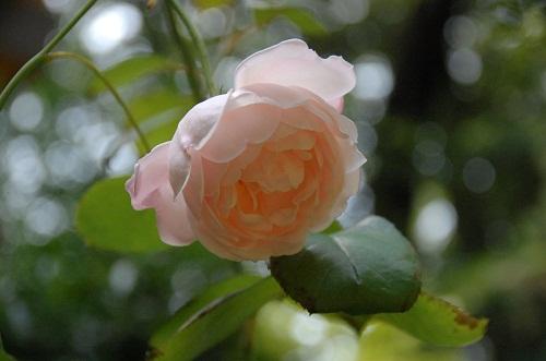 jardin de azamann 2