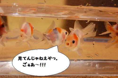 bebe-suzuki3meses12dias 5