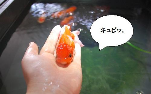 bebe-suzuki4meses,tamaninos8meses 6