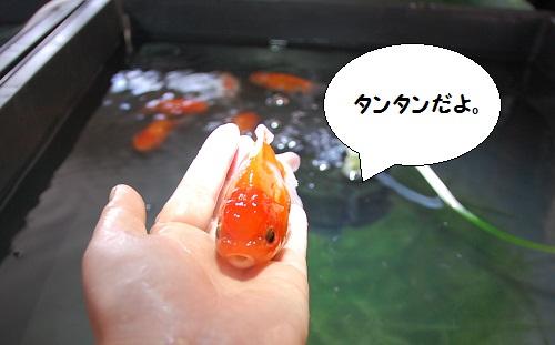 bebe-suzuki4meses,tamaninos8meses 5