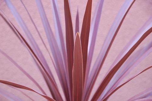 flor en verano 5