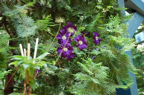 flor en verano 2