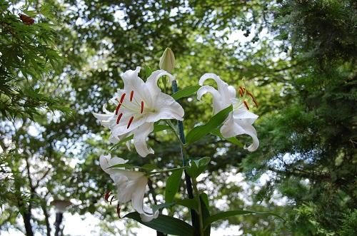 flor en verano 1