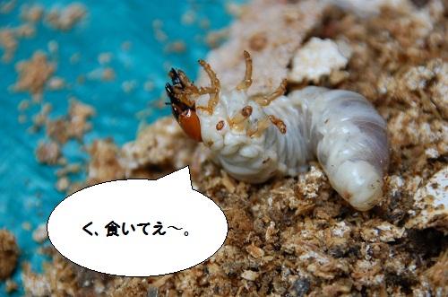 los insectos 5