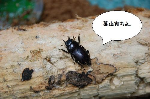 los insectos 2