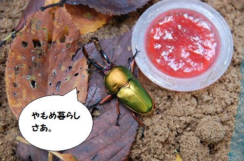 los insectos 1