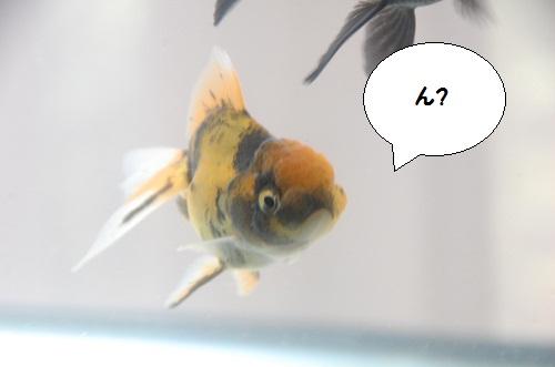 hukusuke 4