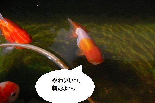 2012 12 07  4
