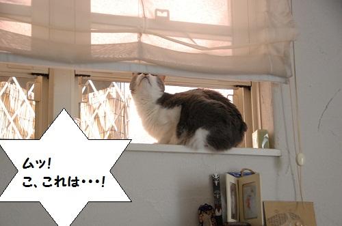 la ventana 4