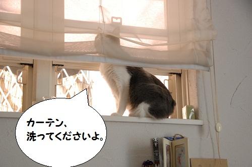 la ventana 5