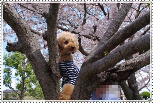 木登りこうちゃん