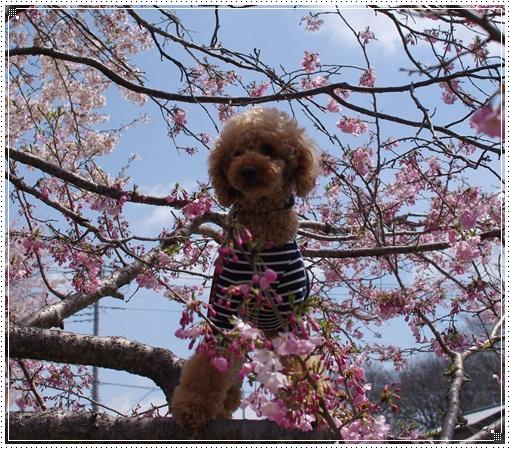 桜とこうたろう