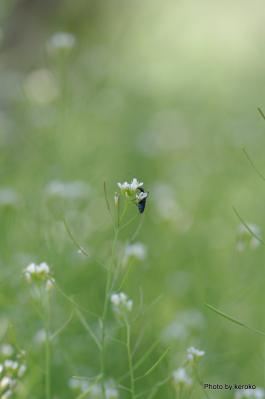草原の輝き1