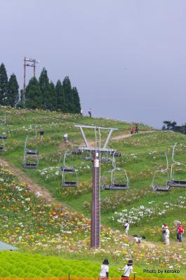 2012箱館山ゆり園2