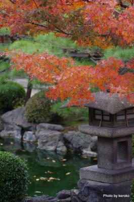 東寺の紅葉4