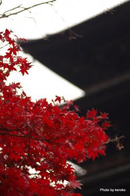 東寺の紅葉5