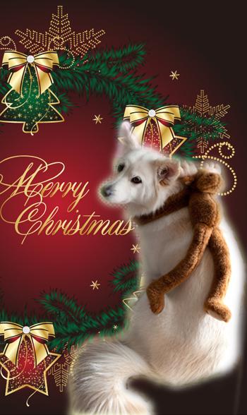 姫縦クリスマス