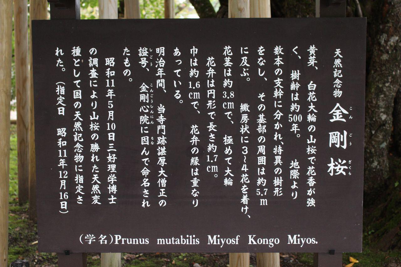 日光山輪王寺-12