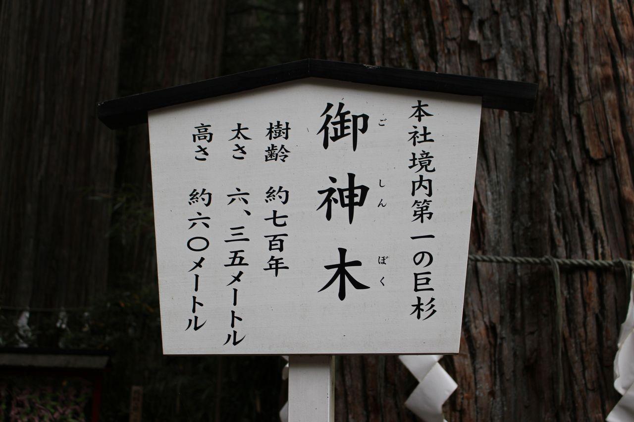 二荒山神社-34