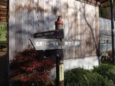 竹 (1)