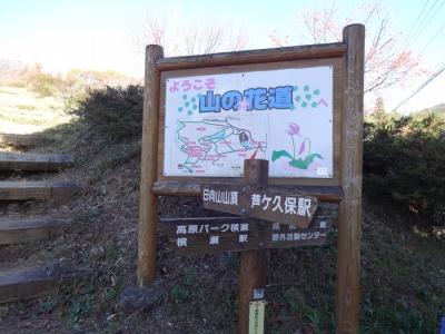 竹 (8)