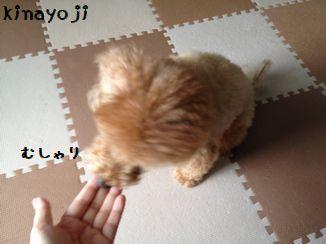 ぐるるん4