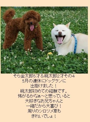 Baidu IME_2014-12-11_11-22-43