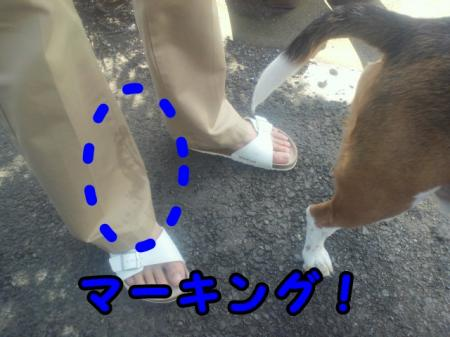 DCIM0083_convert_20121229222238.jpg