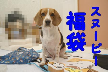 DSC00193_convert_20121230234259.jpg