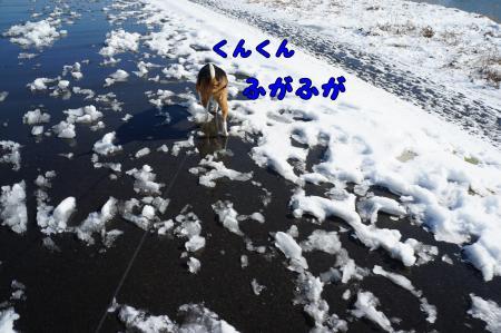 DSC00422_convert_20130115224937.jpg