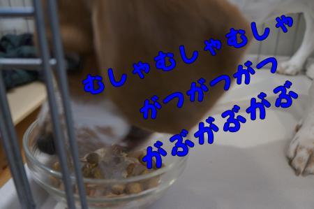DSC00500_convert_20130119224828.jpg