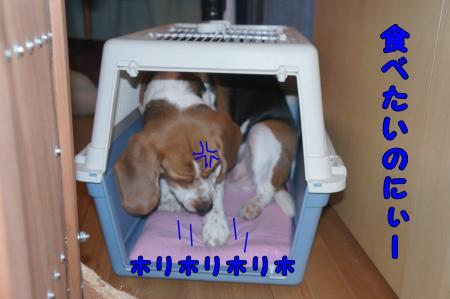 DSC01539_convert_20130307181310.jpg