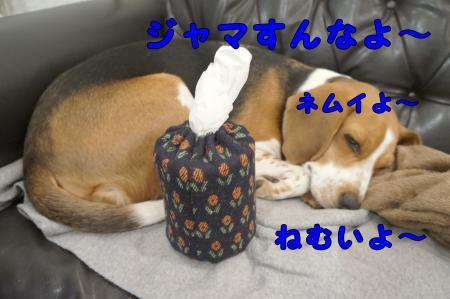 DSC01554_convert_20130304220810.jpg
