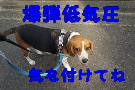 DSC01984_convert_20130407182919.jpg