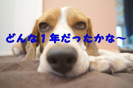 DSC08127_convert_20121229222406.jpg