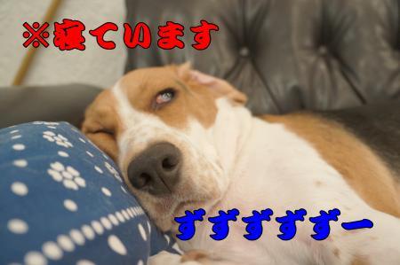 DSC09863_convert_20121223001512.jpg