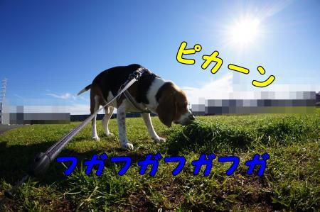 DSC09890_convert_20121216223212.jpg