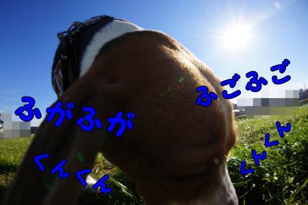 DSC09893_convert_20121216223358.jpg