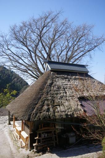 金言寺の屋根(裏側の状況)