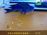 CIMG1112_20121108100714.jpg