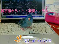 FtZp_YfadG3Ltuz_1351408628_mj.jpg