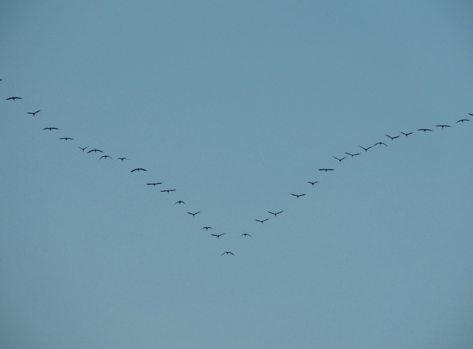 渡り鳥 1