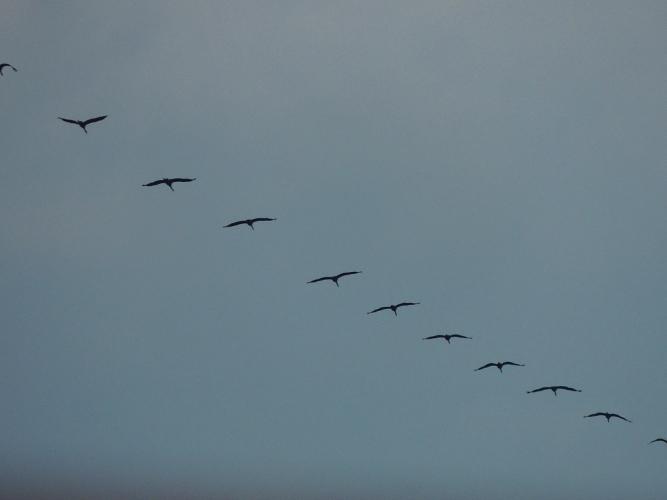 渡り鳥 3