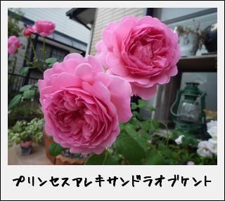 kako-6uBRurzsb517mXVm.jpg