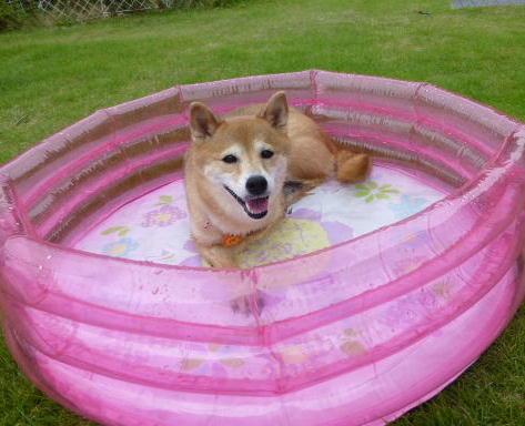 プールでもいいよね