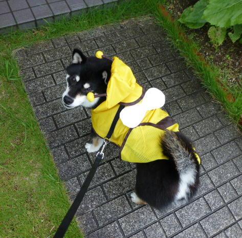 雨のお散歩 1