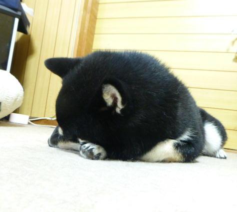 寝て待つ クロ