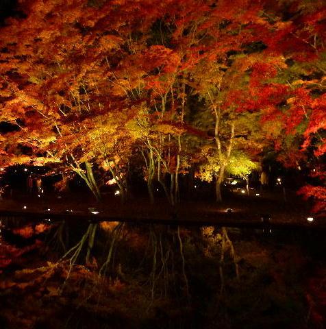 曽木公園 1
